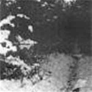 Forest Silence - The 3rd Winter FLAC